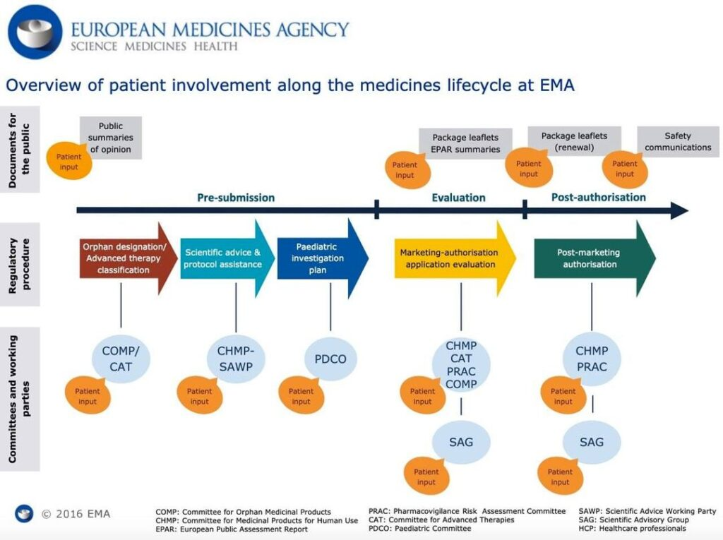 Graphic overview of Patient involvement along medicines lifecycle at EMA